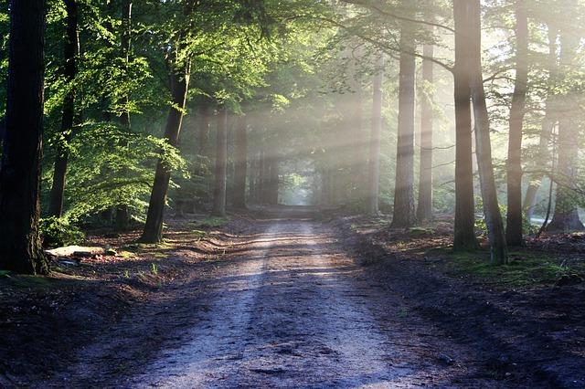 Prečo si zvoliť čas vprírode za hlavnú náplň dňa, či týždňa