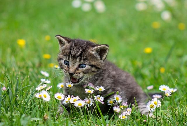 Ako dlho žije mačka?